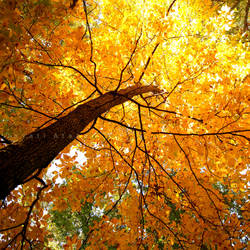 Underneath this tree by Photoloaded