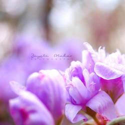 Flutter like the butterflies by Photoloaded