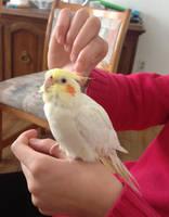 Mango the Adorabird by MagicBirdie