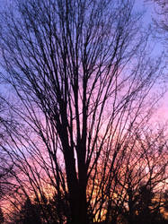 Rad Sunset by MagicBirdie