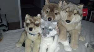 Fao Schwarz and Gipsy wolf Family by Vesperwolfy87