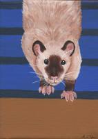 Agility Rat by wolfysilver
