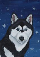 Siberian Husky by wolfysilver