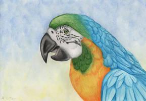Macaw by wolfysilver
