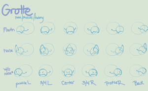 Grotte Nose / Muzzle Anatomy Guide by LilKyubee
