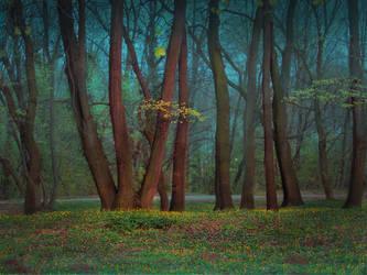 Spring among trees by Olga17