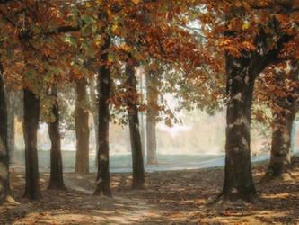 Autumn leaves by Olga17
