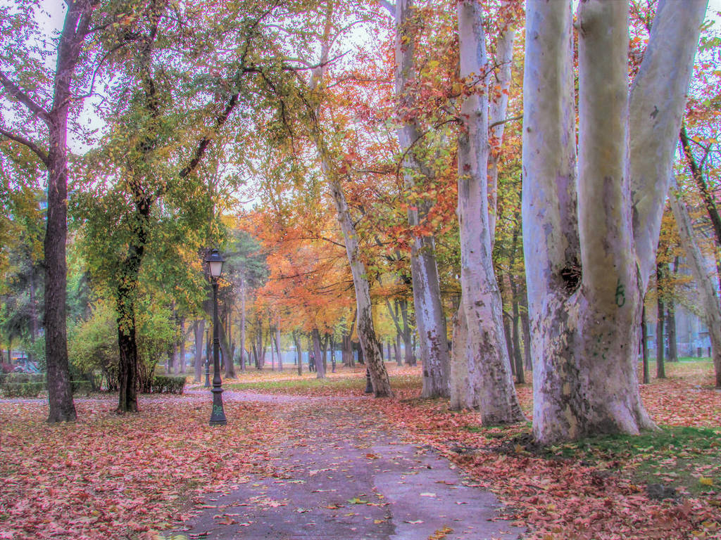 Autumn in park by Olga17