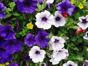 Random Flowers by jldyr