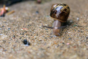 [ Photography ] Snail 12 by Dreamsverse