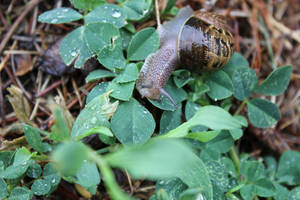 [ Photography ] Snail 15 by Dreamsverse