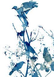 bird1 by ilsire
