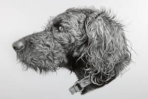 Ben the Labradoodle. by grimleyfiendish