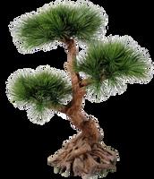 Tree 002 - Clear Cut by Travail-de-lame