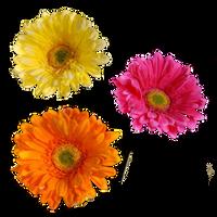 Flower 001 - Clear Cut PNG by Travail-de-lame