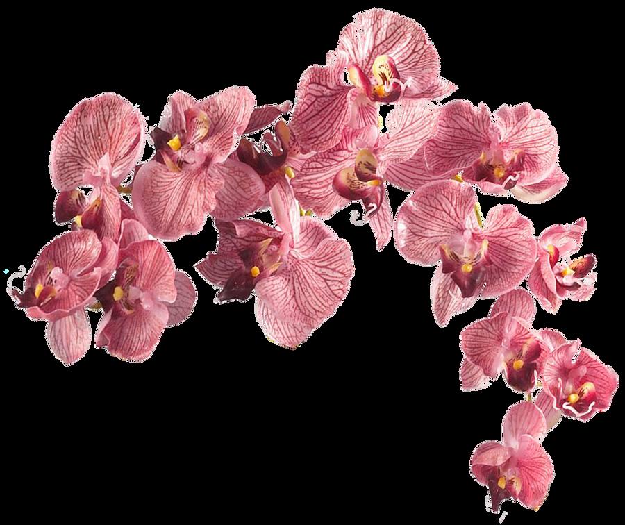 Flower 003 - Clear Cut PNG by Travail-de-lame