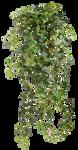 Ivy 001 - Clear Cut PNG by Travail-de-lame
