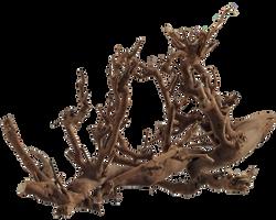 Plant Roots 001 - Clear Cut PNG by Travail-de-lame
