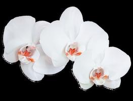 Flower 009 - Clear Cut PNG by Travail-de-lame