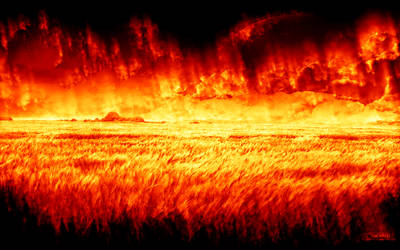 The Field in Flames by signap