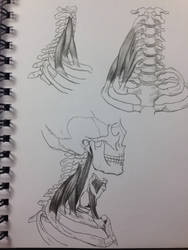 3 Layers/Views of the Deep Muscles of the Neck by BillyDoubleU