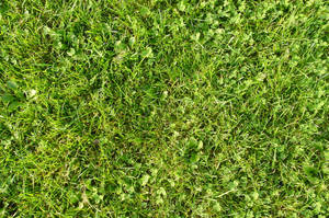 Grass by tmm-textures
