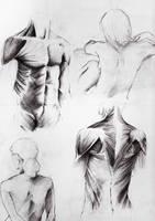 anatomy by ilaBarattolo