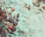 Blackberries by XxFreakOfNaturexX