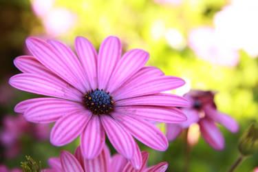 Purple by Lokattan