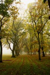 Misty Meadows by Lokattan