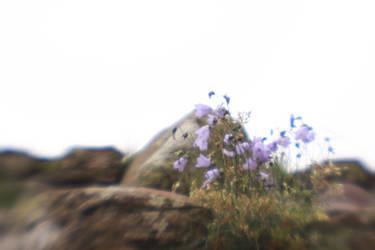 Bluebells lensbaby by Lokattan