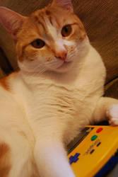 GameCat. by disfordanger