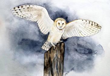 Night Flight by DundalkChild