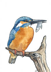 100 Birds: #15 Common Kingfisher by DundalkChild