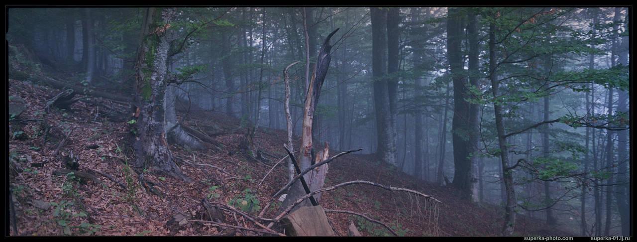 Secret woods by superka01