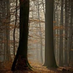Fall Foliage by DpressedSoul