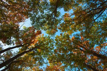 Treetops by Kamal-Q