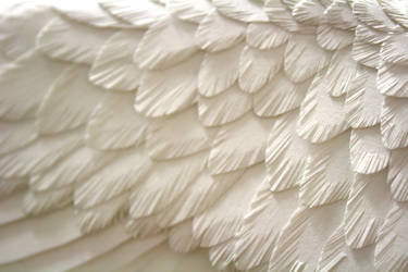 Paper feathers by ZackMclaughlin