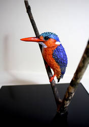 Finished and mounted paper Malachite Kingfisher by ZackMclaughlin