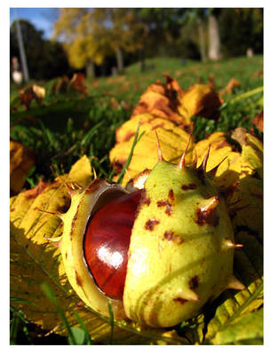 autumn.three by nachtangst