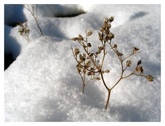 winter IV by nachtangst