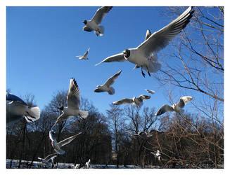 gulls by nachtangst