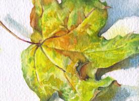 Autumn leaf. ACEO by OlgaSternik