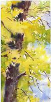 Autumn tree by OlgaSternik