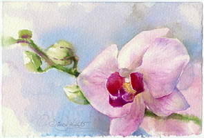 Orchid with the buds by OlgaSternik