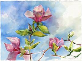 Magnolia by OlgaSternik