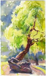 Weeping willow by OlgaSternik