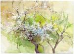 Apricot blossom by OlgaSternik
