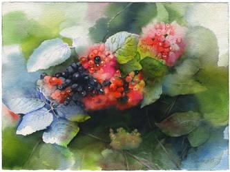 Elderberry by OlgaSternik