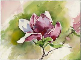 Magnolia flower. Plain air by OlgaSternik